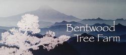 Bentwood Tree Farm